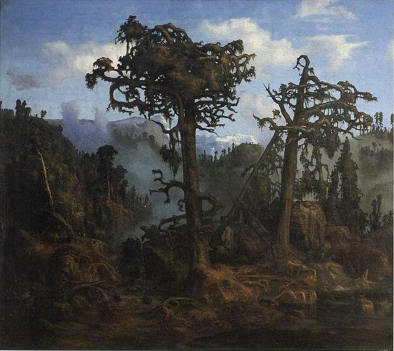 1865 Gamle_furutrær